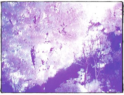 赤外線写真1