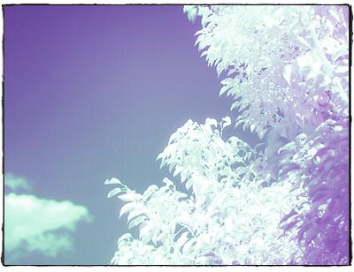 赤外線写真2