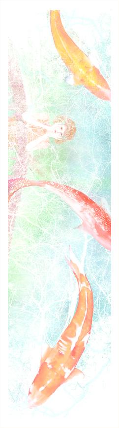 carp or love  鯉